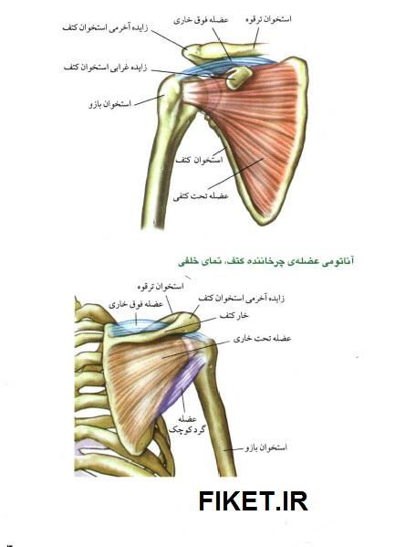 دانلود PDF کتاب آناتومی پرورش اندام